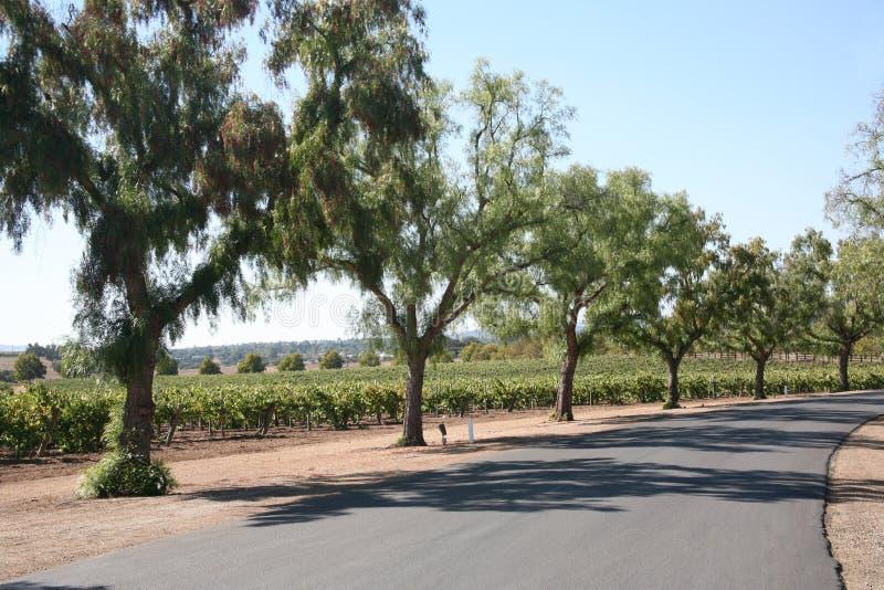 Grape Vineyard Driveway Royalty Free Stock Image