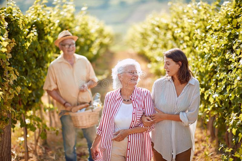 Grape Vineyard fields. Grape harvesting. Happy mother and daughter on vineyard royalty free stock photography