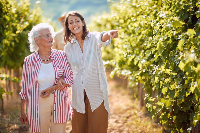 Grape Vineyard fields. Grape harvesting. Smiling mother and young daughter on vineyard stock images