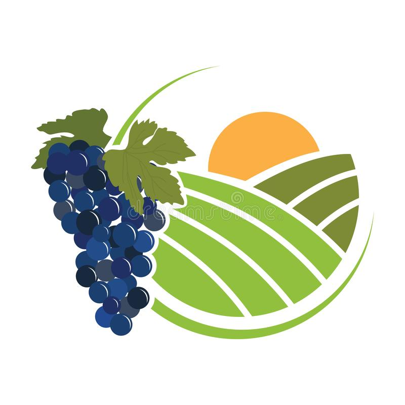 Grape with vineyard. In background. logo icon vector illustration