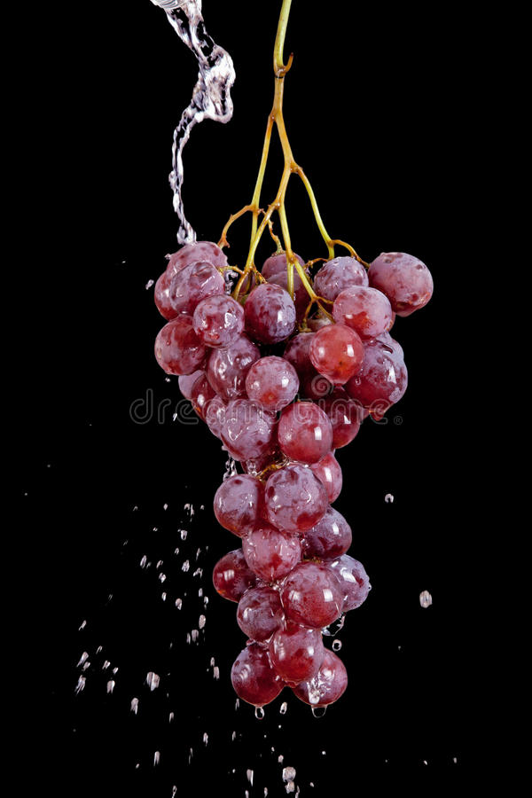 Grape with waterdrops isolated on black royalty free stock photo