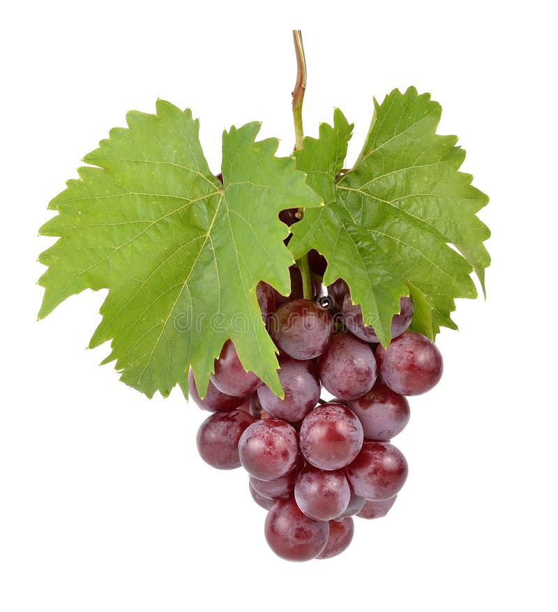 Grape On White Background royalty free stock images