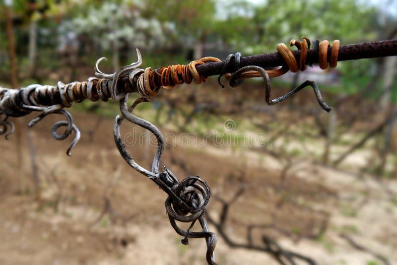 Grape on wire stock photo