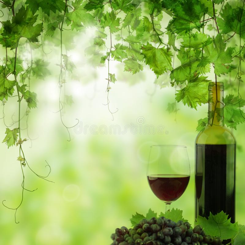 Grapea, Glass and Bottle of red wine in vineyard. Vineyard in morning light.  stock illustration