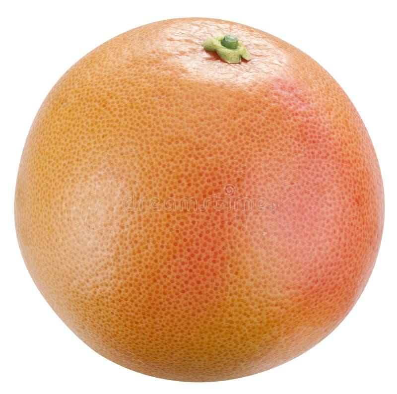 Grapefruit. stock foto