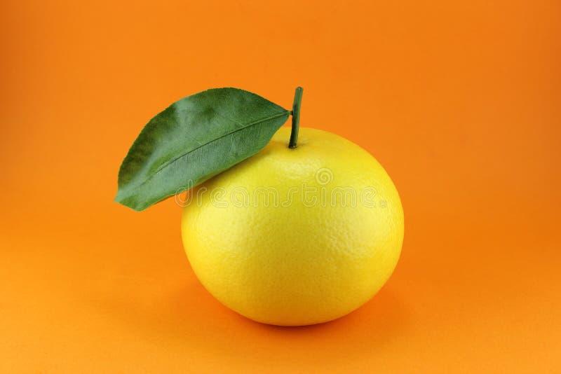 Download Grapefruit stock photo. Image of harvest, snack, leaf - 29055164