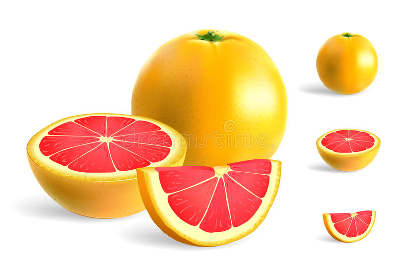 Grapefruit stock illustration