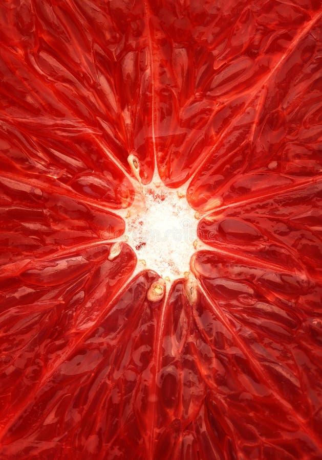 Grapefruit close-up royalty free stock images