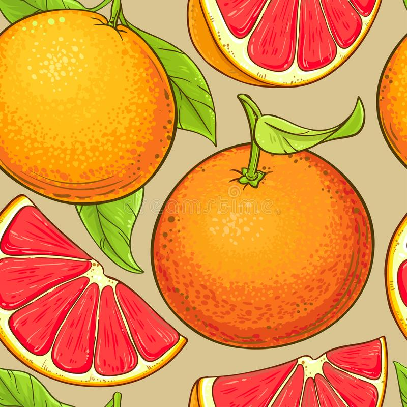 Grapefruit fruits vector pattern royalty free illustration