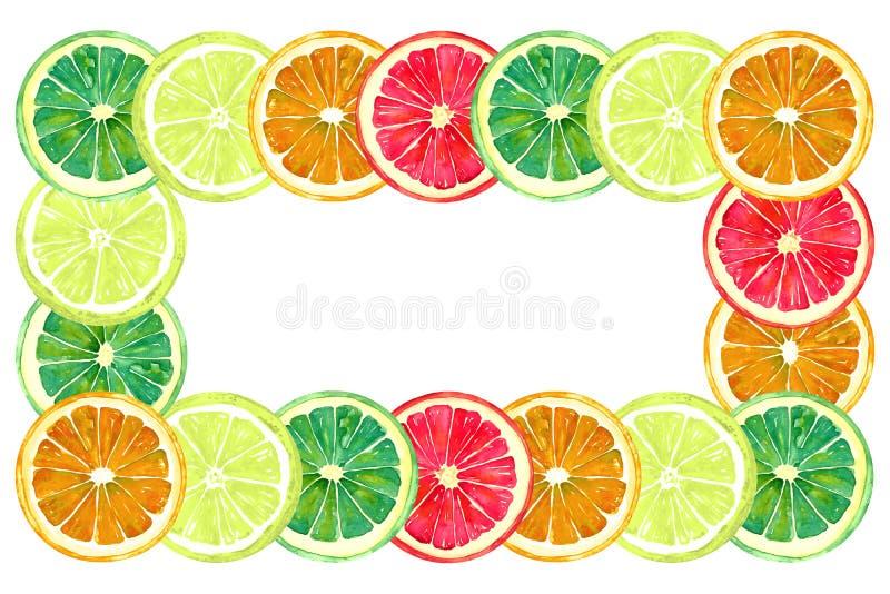 Grapefruit, sinaasappel, kalk en citroen, horizontaal kader voor groetkaart of bannerontwerp, witte achtergrond vector illustratie