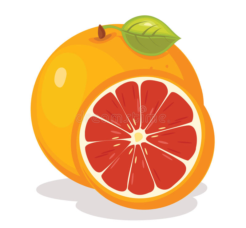 Download Grapefruit Vector Illustration Stock Vector - Image: 25386551
