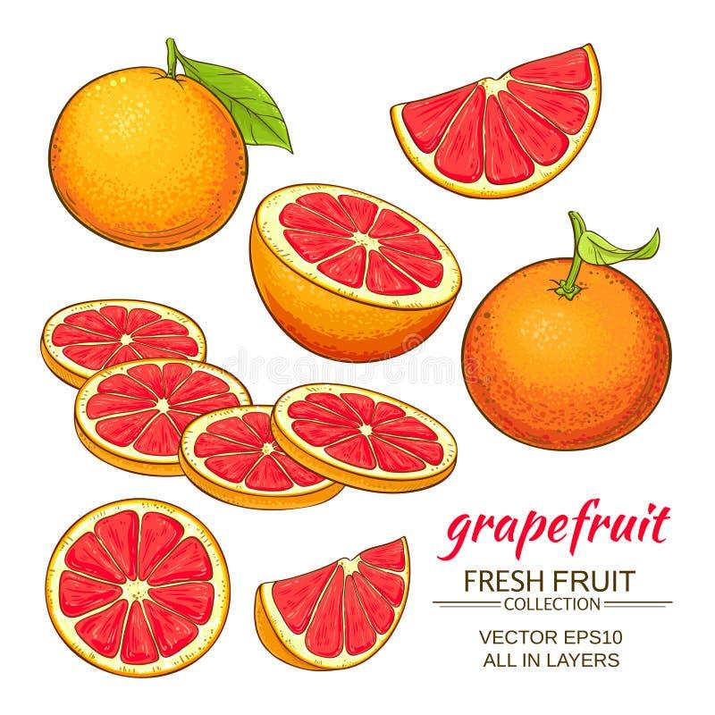Grapefruit vectorreeks stock illustratie