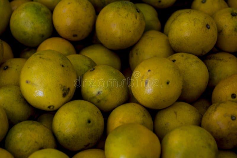 Grapefruites nas pilhas escolhidas das árvores perto acima fotografia de stock royalty free