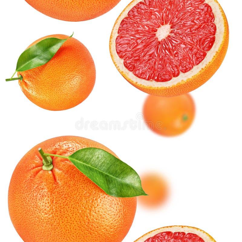 Grapefruitowa bezszwowa tekstura lub wzór zdjęcie stock