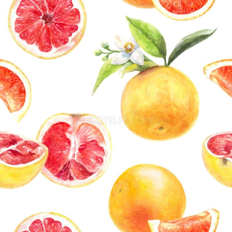 Grapefruitowego rżniętego ręka remisu akwareli bezszwowy wzór royalty ilustracja