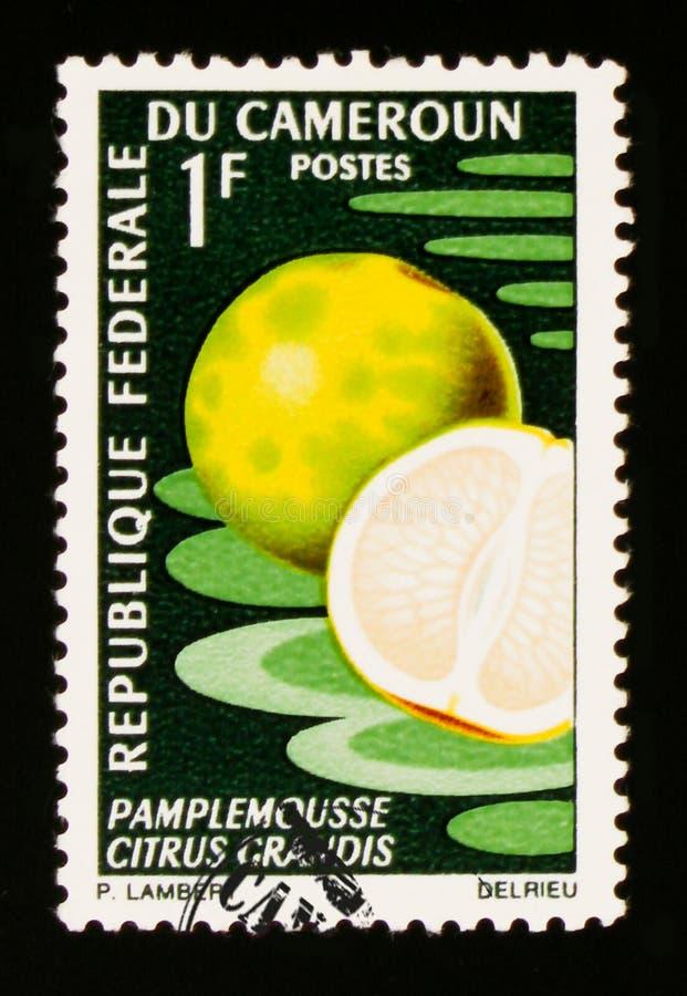 Grapefruitowy cytrus Grandis około 1967, zdjęcia stock
