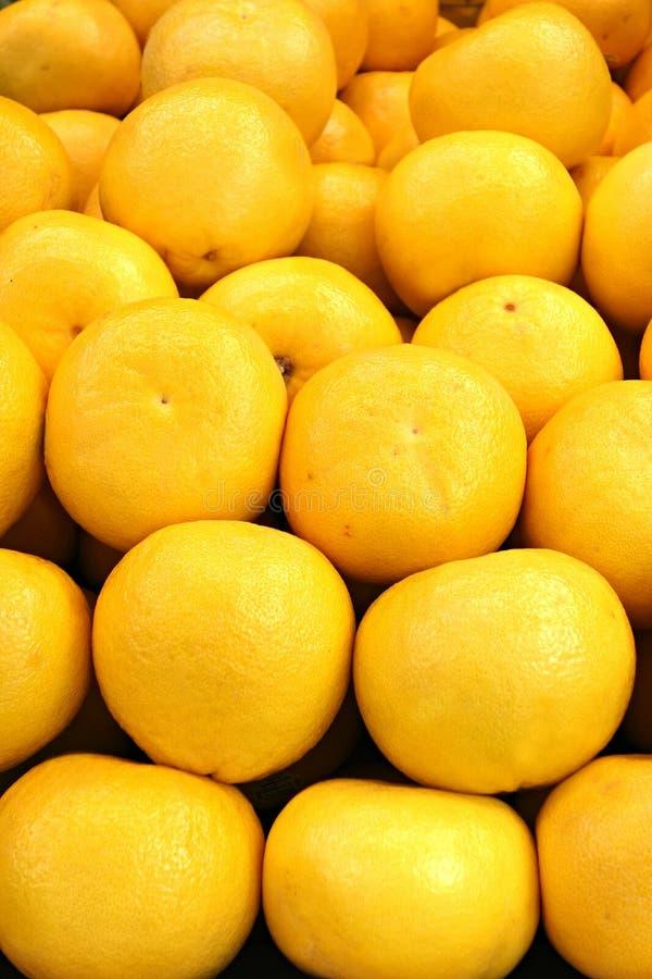 Grapefruits zdjęcia stock