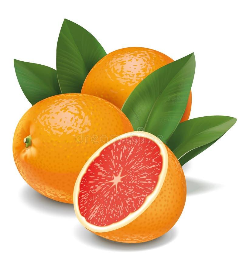 Grapefruits royalty free stock photography