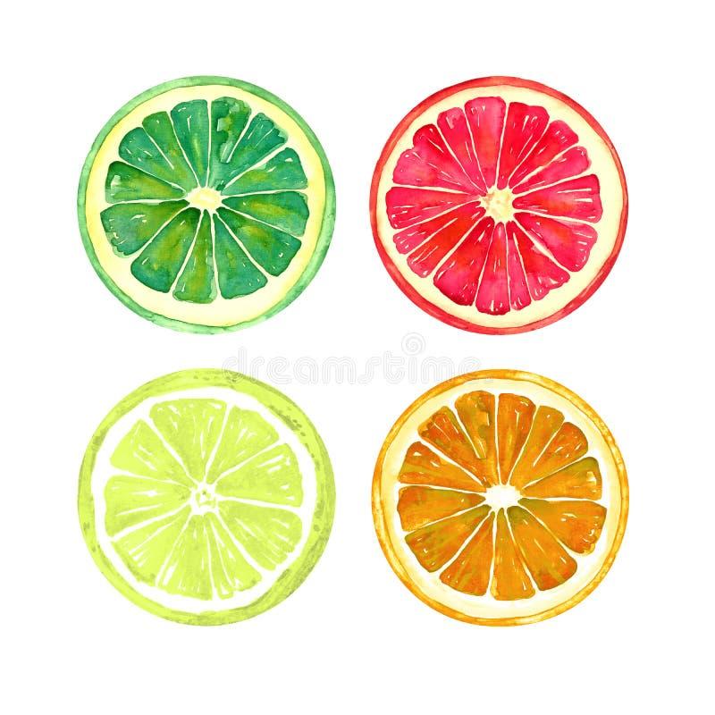 Grapefrukt-, apelsin-, limefrukt- och citronskivasamling vektor illustrationer