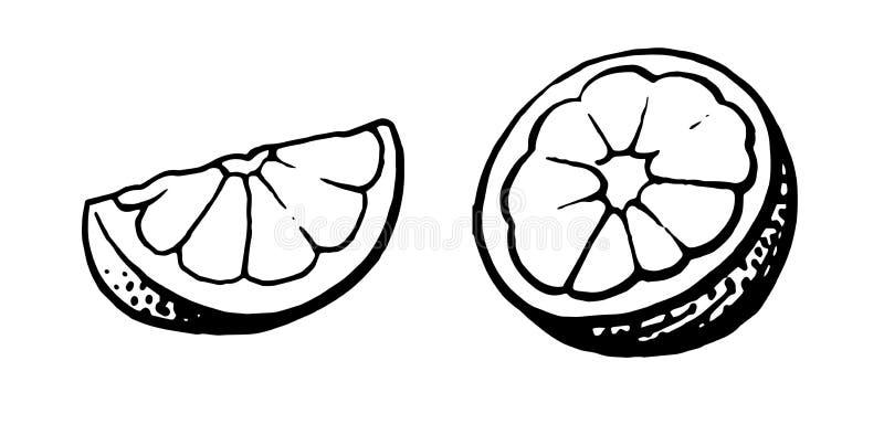 Grapefrukt Handritning Citrus, Citrus, Lime Uppsättning: hela och halva svartvit ritning Felt stock illustrationer