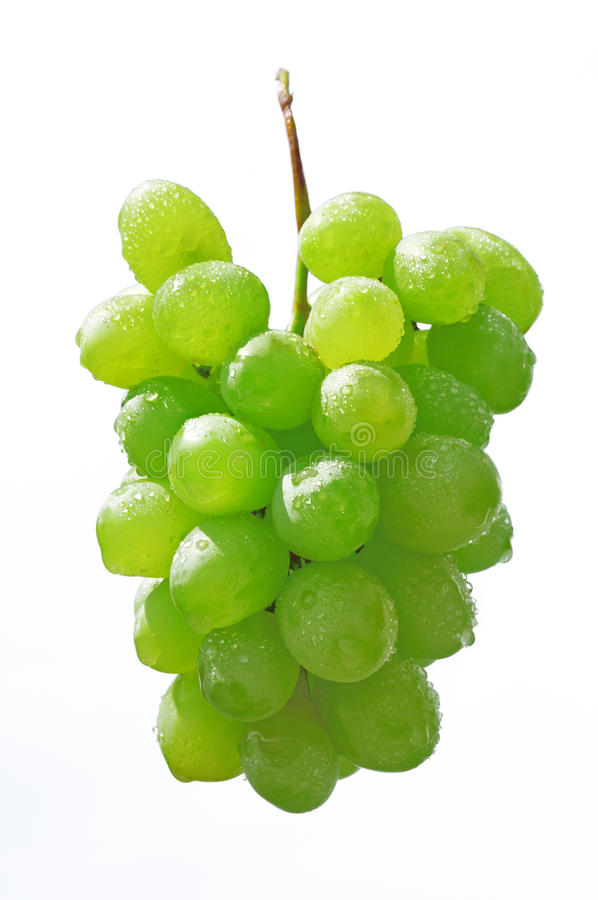 Grapes. Isolated on white background royalty free stock images