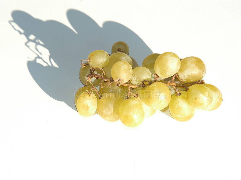 Download Grapes stock photo. Image of grape, grow, wine, vinery, food - 10544