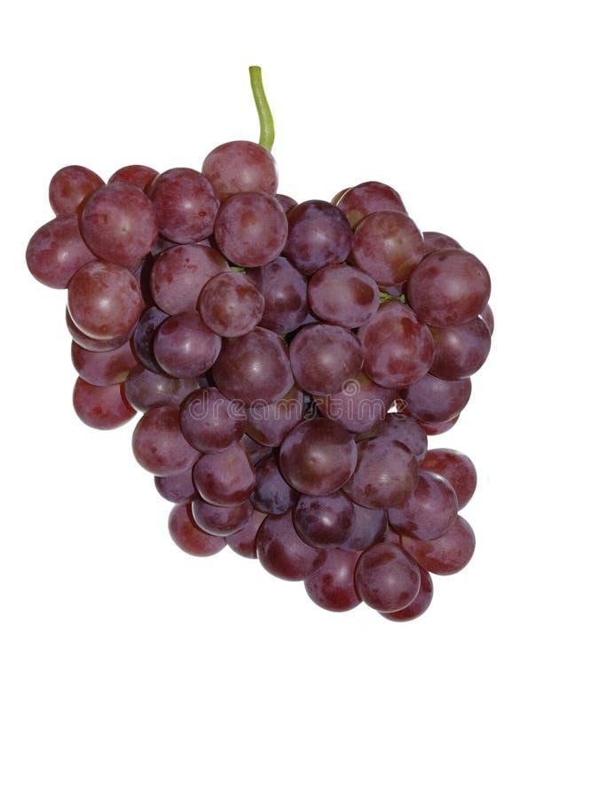 Download Grapes stock image. Image of vineyard, white, wine, grape - 13375937