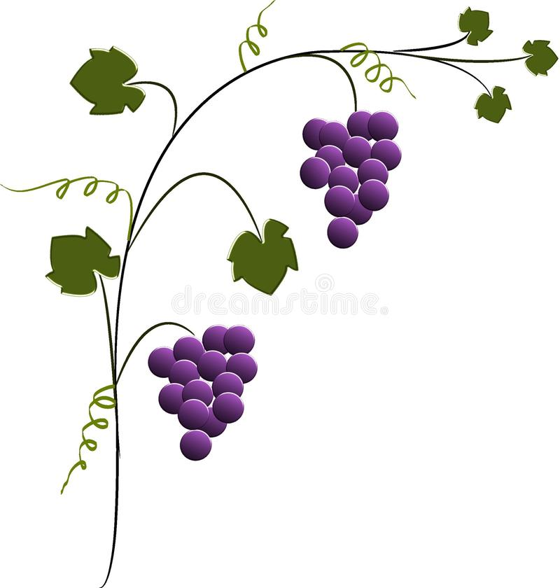 Free Grapes Stock Image - 14828411