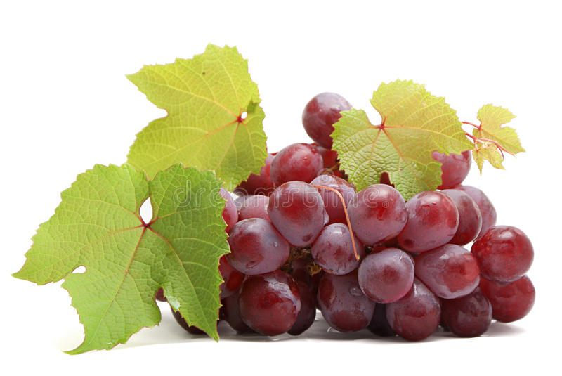 Grapes. Bunch of grapes isolated on white background stock image