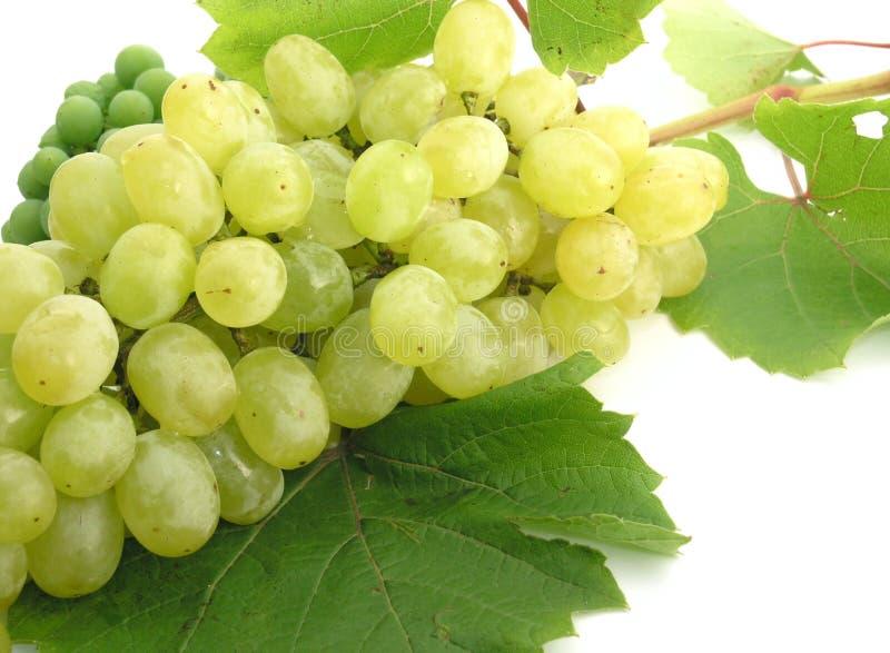Download Grapes stock photo. Image of pulp, grapes, diet, raisine - 229444