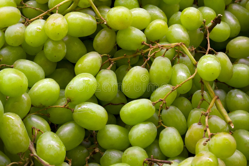 Download Grapes stock photo. Image of five, isolated, food, edible - 2310666