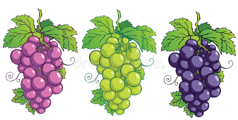 Download Grapes stock vector. Image of illustration, gourmet, green - 25912196