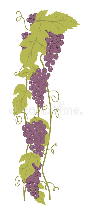 Grapes. Bunch of Grapes. Design element