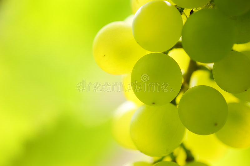 Download Grapes stock image. Image of concept, closeup, grape, copy - 3022981