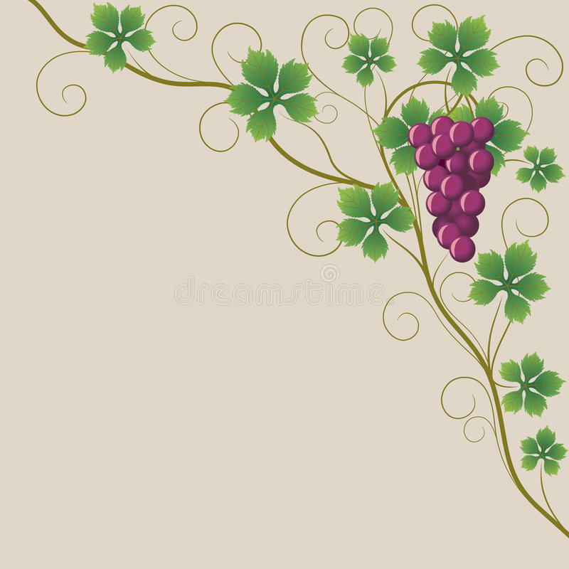 Download Grapes Stock Photography - Image: 5054222