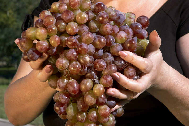 Download Grapes stock image. Image of hold, autumn, dessert, heavy - 517623