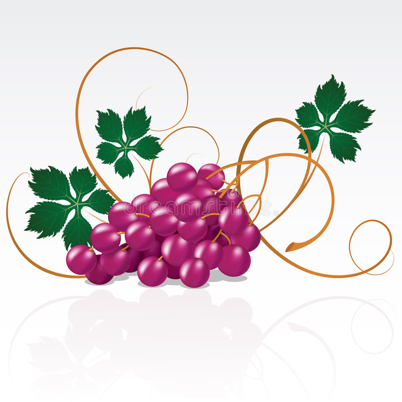 Grapes royalty free illustration