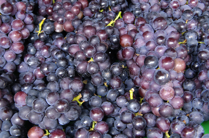 Grapes. Red Grapes on the dark background stock photography