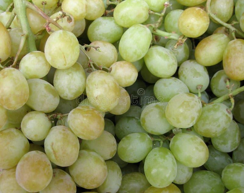 Download Grapes stock image. Image of bunch, wine, flesh, seasonal - 9212781
