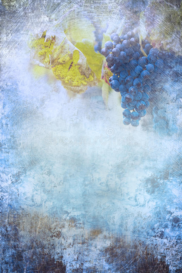 Grapes during autumn. Textured. Photo composite with textures and grapes. It can signify plenty, abundance or it can be used as a background for wine/autumn stock images