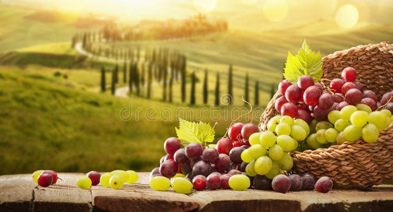 Grapes In A Basket On A Wooden Background stock photos