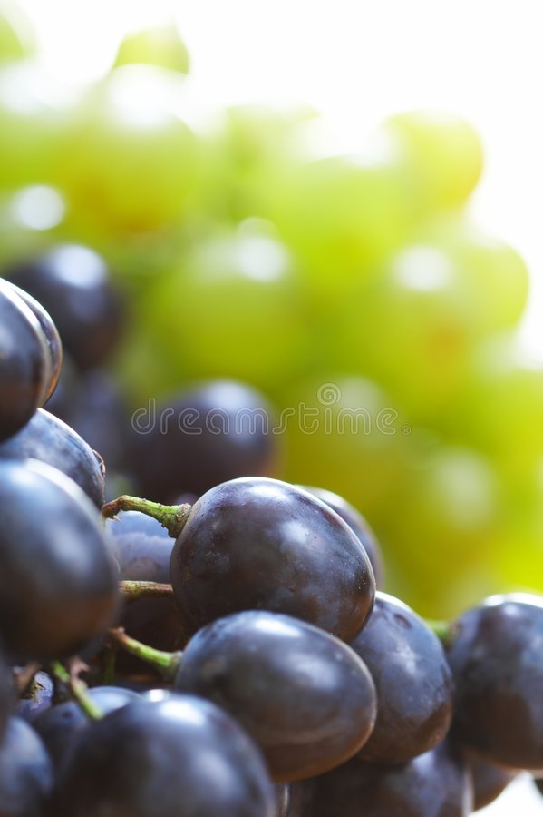 Free Grapes Berry Stock Images - 8619854