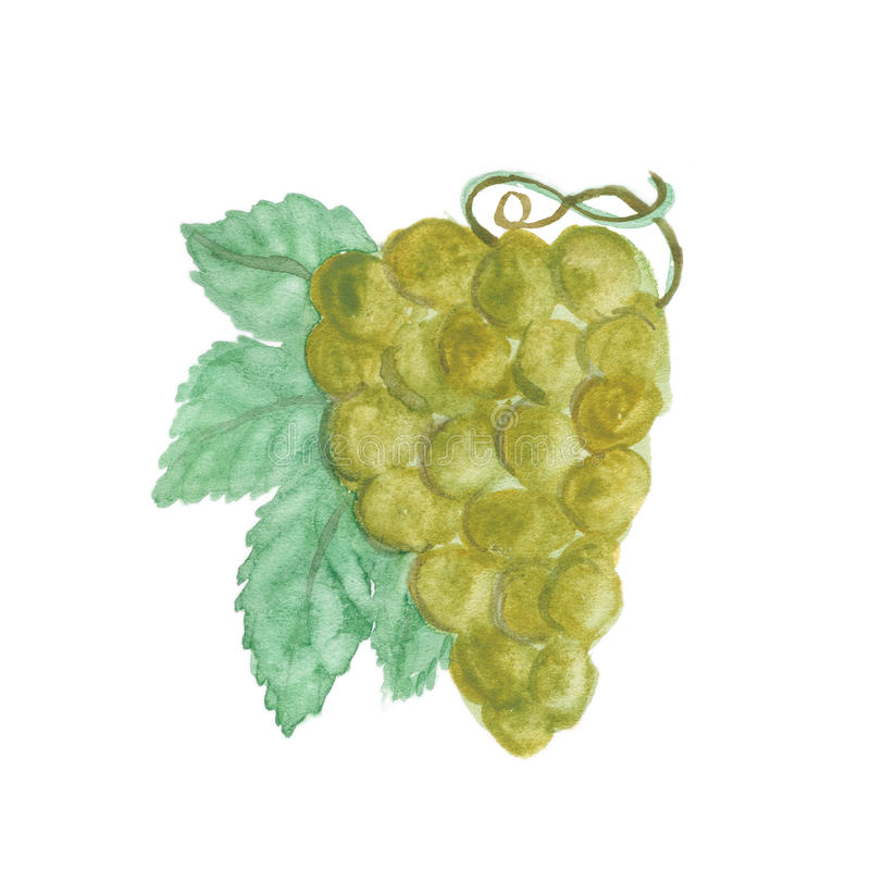 Grapes bunch isolated on white background vector illustration