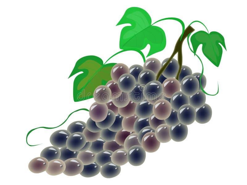 Grapes. A bunch of juicy black grapes. vector vector illustration