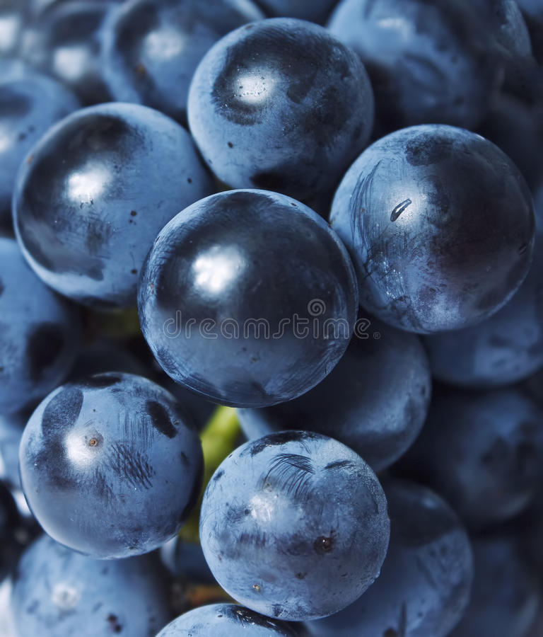 Download Grapes close up stock image. Image of tasty, bunch, agriculture - 26673225
