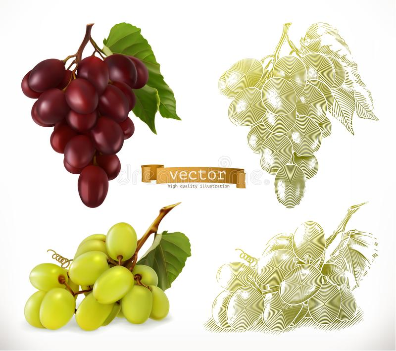 Grapes. 3d realism and engraving styles. Vector illustration. On white background royalty free illustration