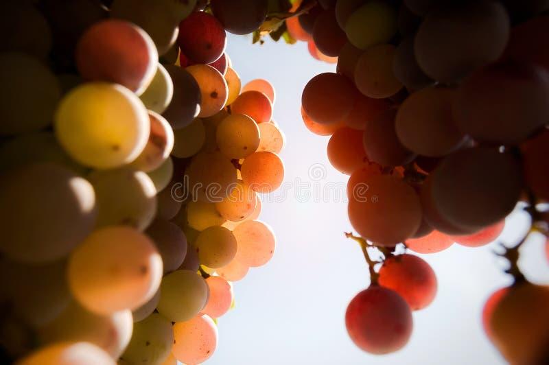 Grapes_defocus royalty-vrije stock afbeelding