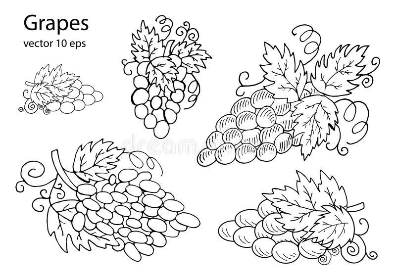 Grapes for design. In the style of a sketch stock illustration