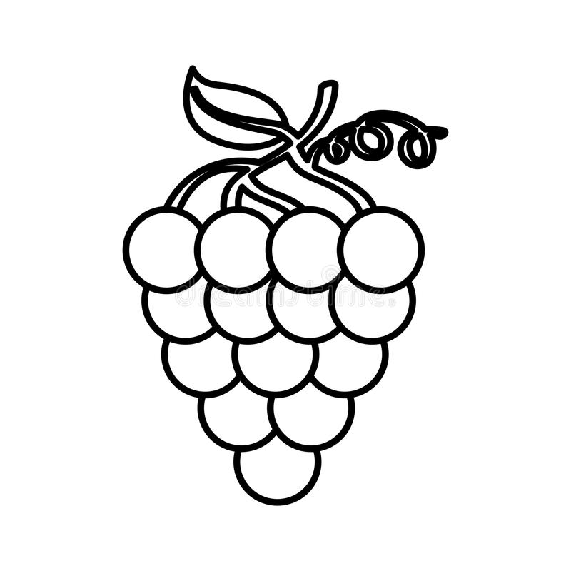 Grapes fresh fruit icon stock illustration