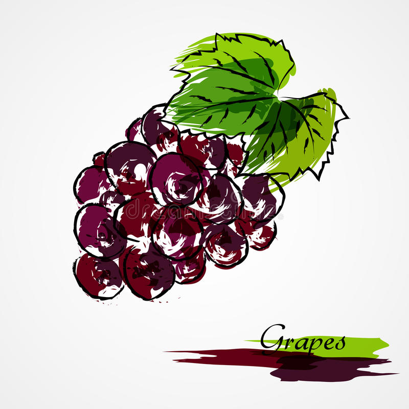 Download Grapes fruit stock vector. Image of hand, grape, ingredient - 41873616